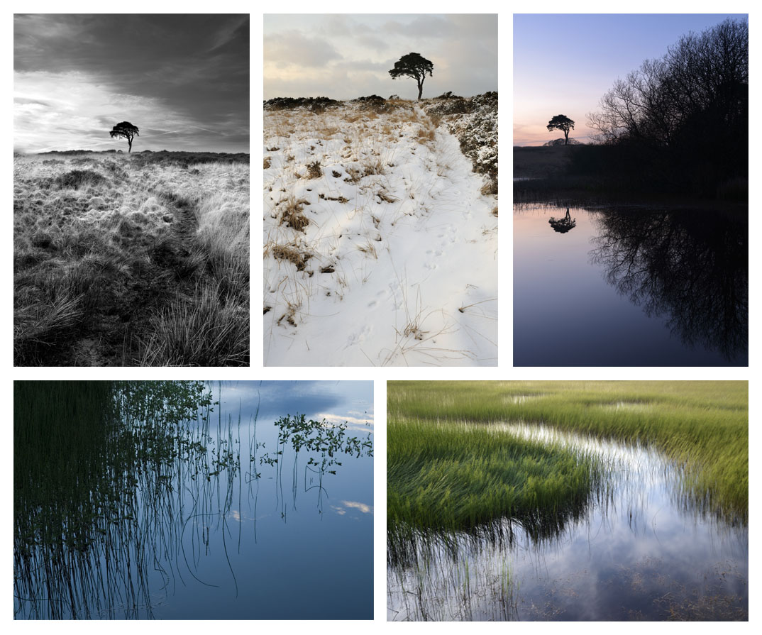 A series of pictures of the Waldegrave Pond near Priddy, Somerset.